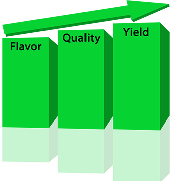 flavor-quality-yield